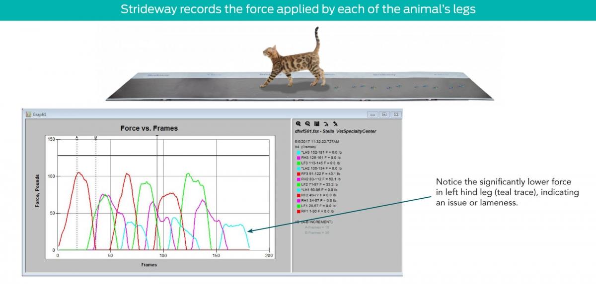 Animal Gait Analysis Technology | Tekscan
