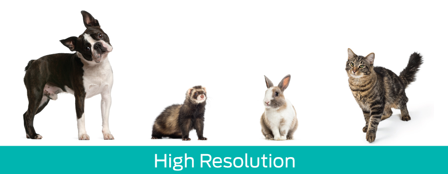 The ideal configuration for smaller animals