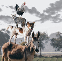 Animal stack image