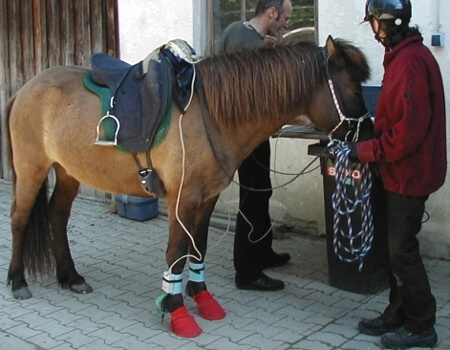 Equine gait analysis with Hoof System