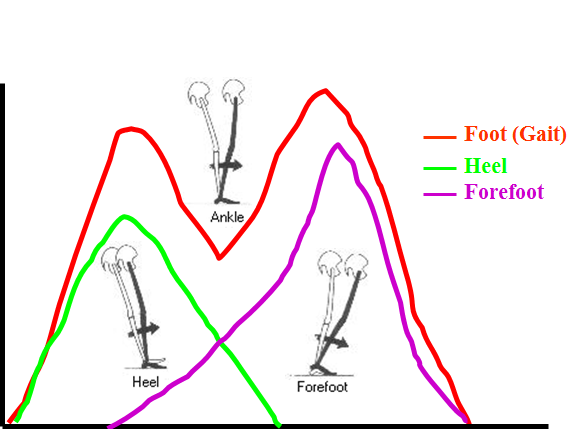 Relationship Between the Force Curves and the Pivots
