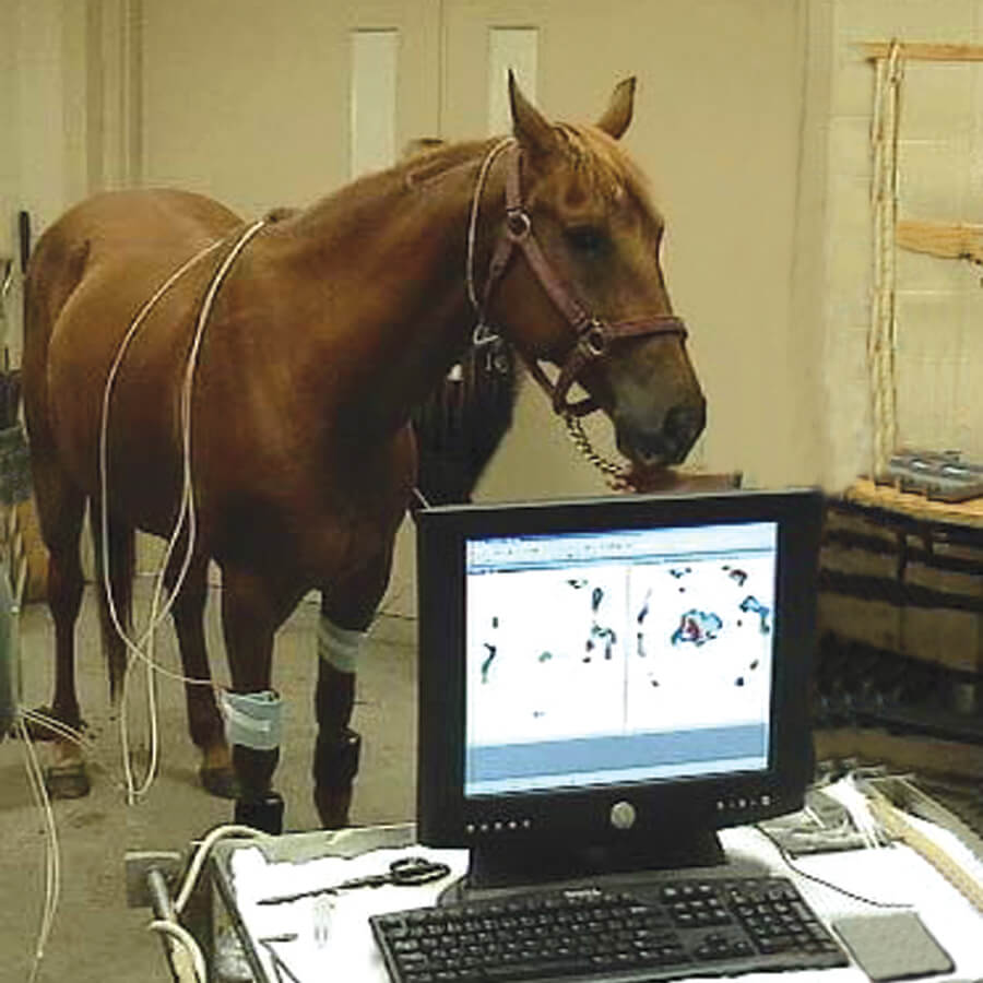 horse and laptop