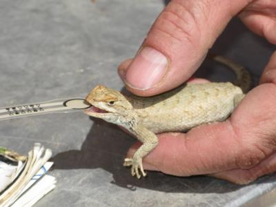 Bite Force Measurement of Reptiles | Tekscan