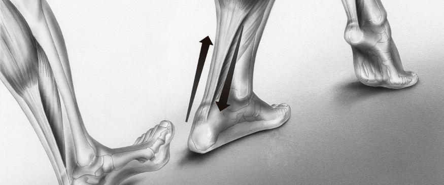Foot function diagram