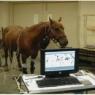 Hoof Pressure Mapping Study